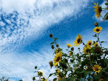 Face the sun - Free image #297159