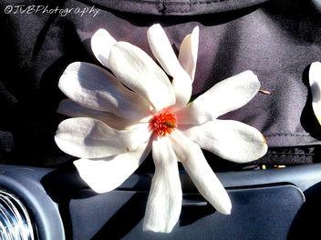 Magnolia Flower - бесплатный image #297259