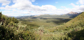 Denali Landscape - Free image #297339