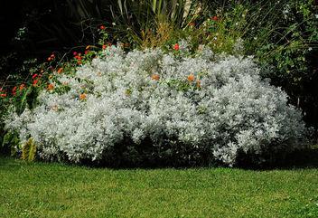 France (Montpellier) Garden flowers - image gratuit #298669