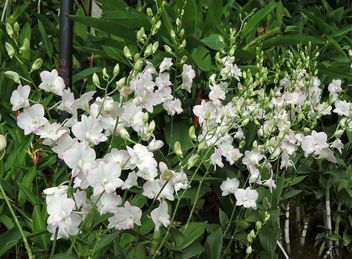 Singapore-National orchid garden 11 - Free image #299129