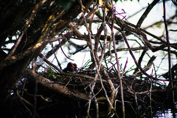 nest on water - image #299219 gratis