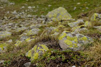 Lichen-Covered Rocks - Free image #299519