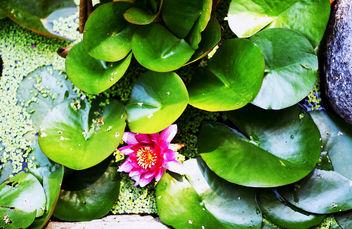 flower - image gratuit(e) #299759