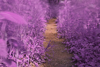 Windy Goose Creek Trail - Lavender Fantasy HDR - бесплатный image #300149