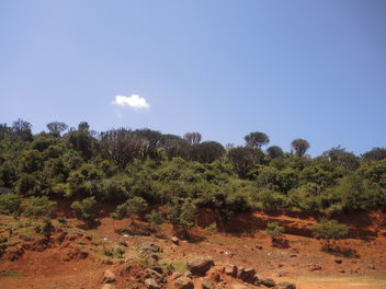 Kenya (Rift Valley) Amazing Candelabra trees in savanna - image gratuit #300429