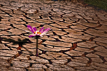 Lone flower in a dry place - image #300629 gratis