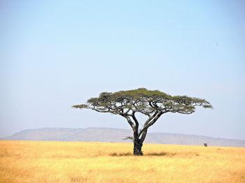 Tanzania (Serengeti National Park) Tranquility - Free image #300699