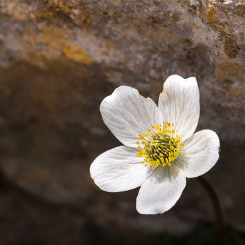 Tiny Wildflower.jpg - Free image #301069