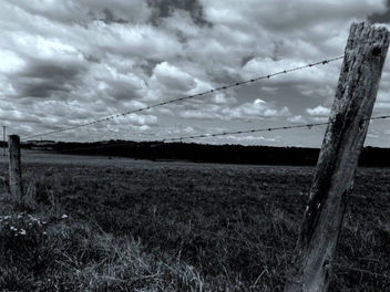 Beyond the fence... - Free image #301189