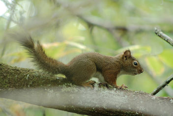 juvenile squirrel - Free image #301239