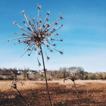 Dry plant - Free image #301369