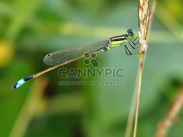 Dragonfly with beautifull wings - Free image #301739