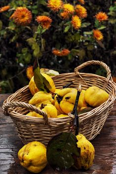 Ripe quinces in basket - image gratuit #302059