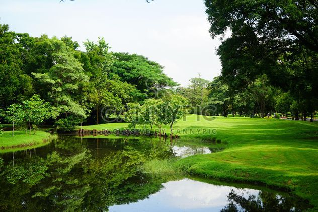 Trees and pond in park of Bangkok - Free image #302339