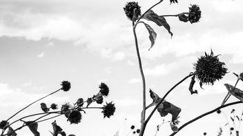 Blossom III - Free image #303209