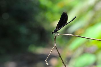 Black dragonfly on twig - image #303769 gratis