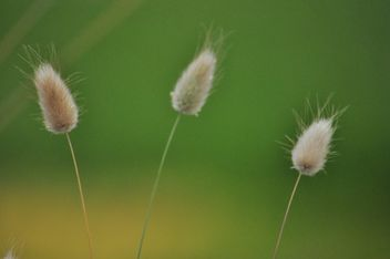 Three grass macro - image #303959 gratis
