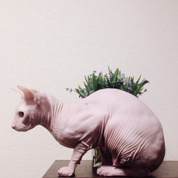 Sphynx cat and flowers on table - image gratuit #304129