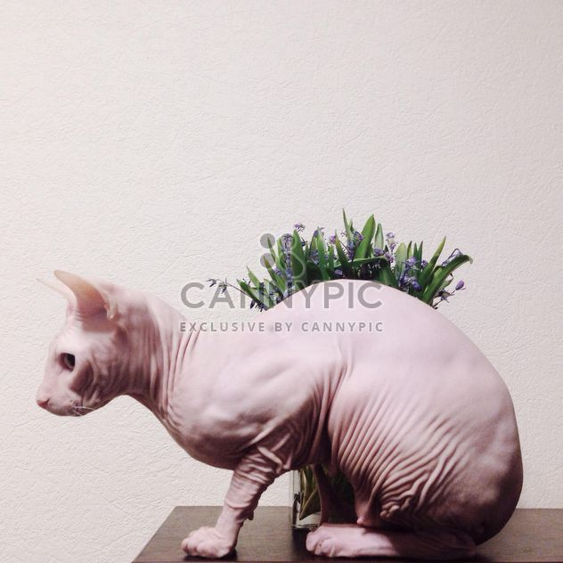 Sphynx cat and flowers on table - Free image #304129