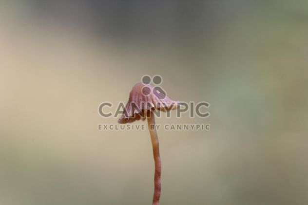 mushroom close up - Free image #304359