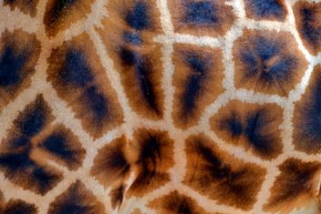 Giraffe spots - Free image #304519