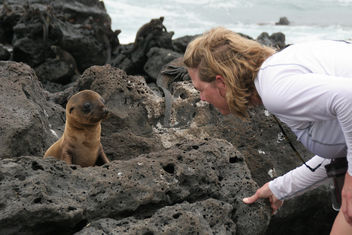 Galapagos Islands - image gratuit #306239