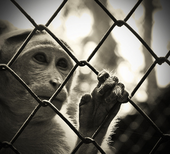 Caged! - Free image #306249