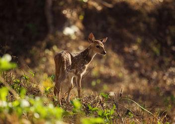 Baby Spotted Deer | Kabini - Free image #306429