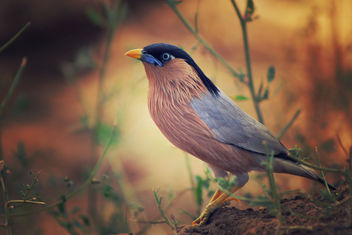 Bird 2 - Free image #306589