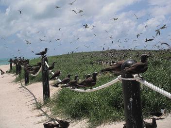 Bird Life - Free image #307039