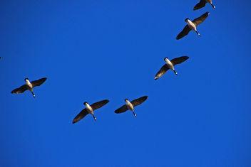 circling before landing - Free image #307099
