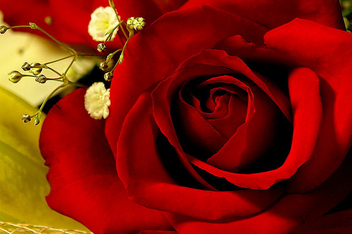 red means 'i love you' - image #307759 gratis