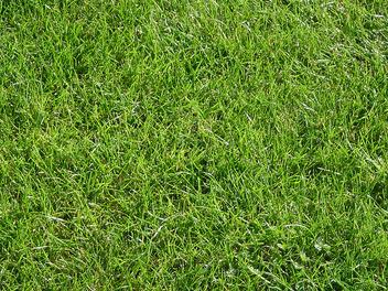 Grass - image #309559 gratis