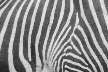 Zebra Pattern - Free image #309839