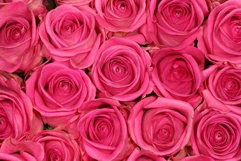 Rosy - Free image #310079