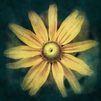 * Daisy * - Kostenloses image #312099