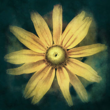 * Daisy * - image gratuit #312099