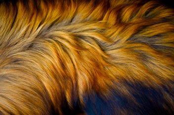 Dog Fur - image gratuit #312489