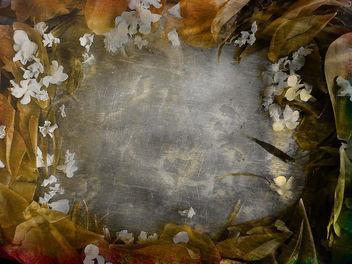 petals- free texture - Free image #312829