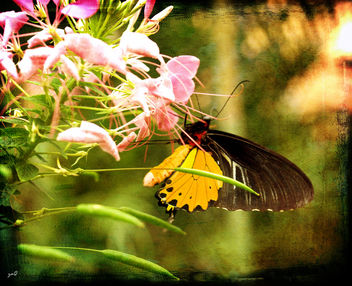 Spread your wings and prepare to fly, for you have become a butterfly.. - Free image #313329