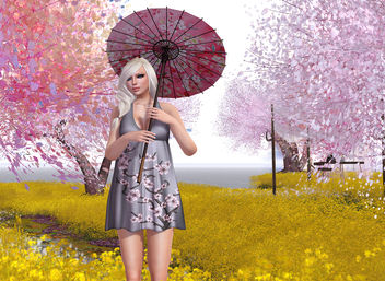 The Liaison Collaborative and Cherry Blossoms - image gratuit #315389