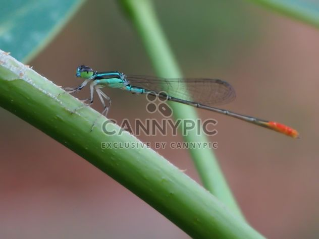 Damsel Fly - Free image #317339