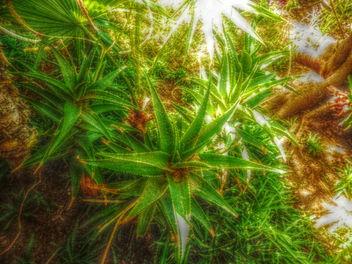Thorny gardens - image gratuit(e) #318799