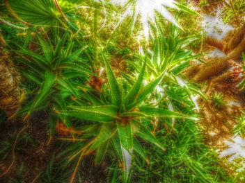 Thorny gardens - Free image #318799