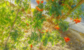 Orange blooms - image #318929 gratis