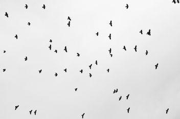 crows - image #323209 gratis