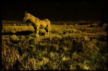 midnight - Free image #323929