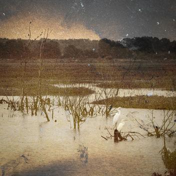 Swamp Birds - Kostenloses image #324359