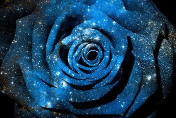Cosmic Rose - Kostenloses image #324369